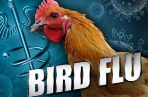 चीन के हुनान प्रांत में बर्ड फ्लू का नया मामला, 1054 पक्षी मारे गए