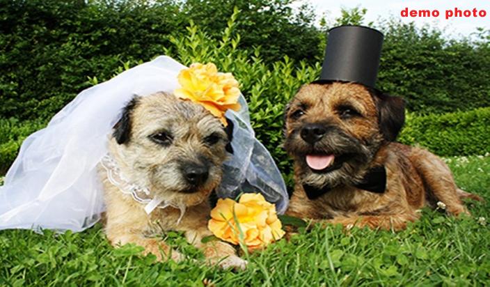 पूरे जश्न के साथ हुईं कुत्तों की शादी, हुए भात और लग्न जैसे कार्यक्रम..