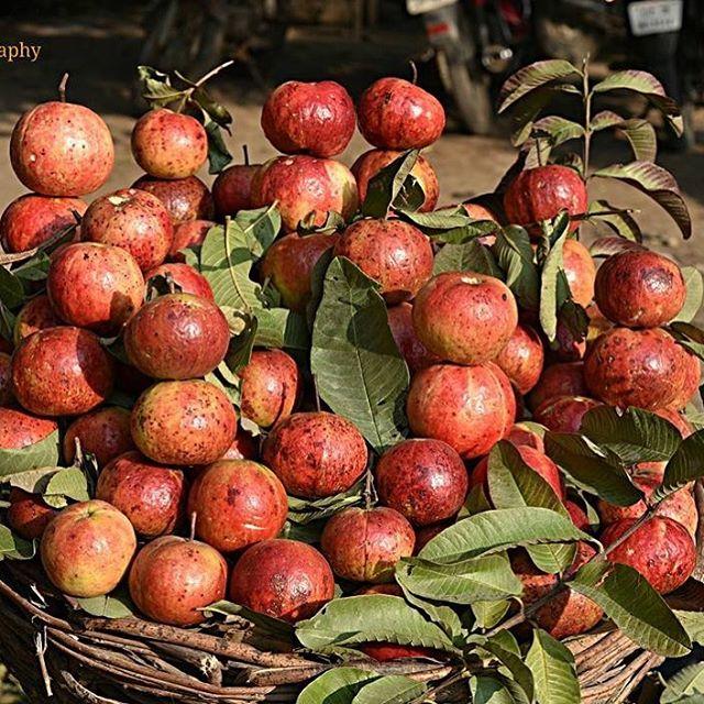 विटामिन सी का भण्डार है इलाहाबादी सेबिया अमरूद