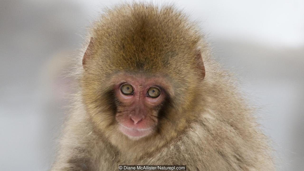 बंदरों के आतंक का समाधान करे सरकार: नायडु